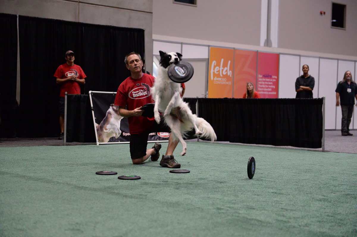 Veterinary Convention exhibit hall dog leaping to catch a frisbee